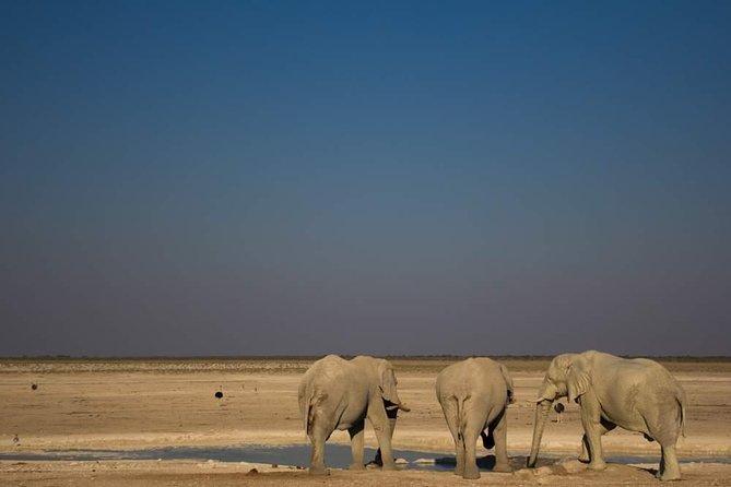 Safari Etosha Express con capacidad de 3 días desde Windhoek
