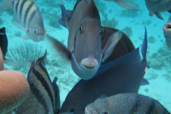 Your open ocean aquarium!