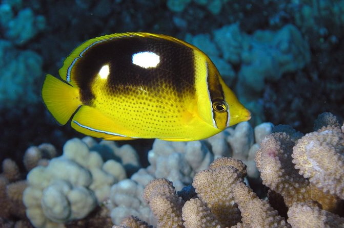Two Tank Lanai Diving Adventure from Lahaina