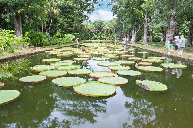 Private North Day Tour: Botanical Garden, Sugar Museum, Rum Tasting, Port Louis