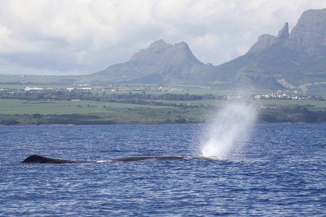マリンディスカバリーツアー:イルカ、クジラ、鳥、ウミガメ、シュノーケリング、ランチ