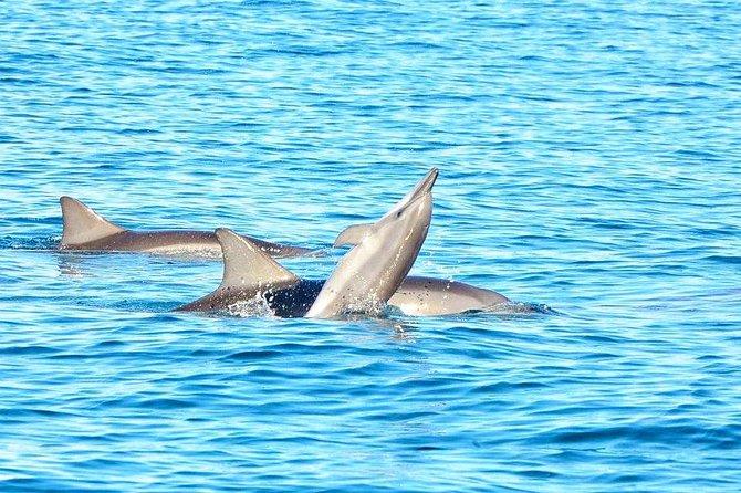 Schwimmen Sie mit wilden Delfinen und der Insel Benitiers mit Mittagessen und Transport