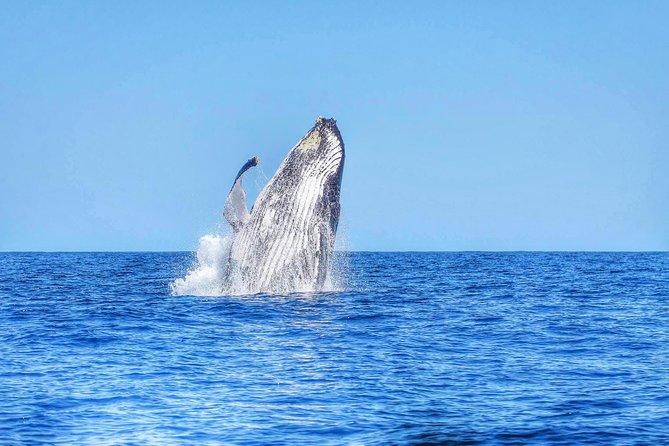 Schwimmen mit wilden Delfinen und Walbeobachtung (Frühstück und Mittagessen inbegriffen)