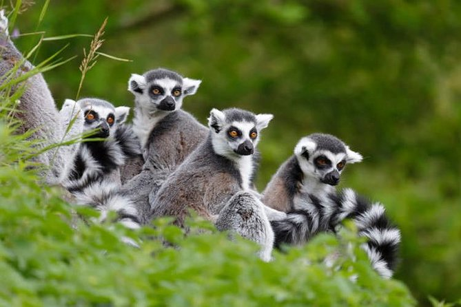 Full-Day Antananarivo, Ambohimanga and Lemurs Park Private Tour