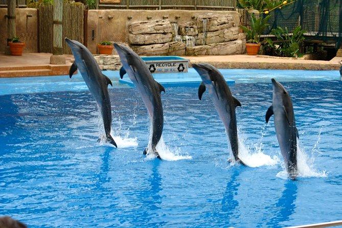 Dolphin Show på Dubai Creek Park