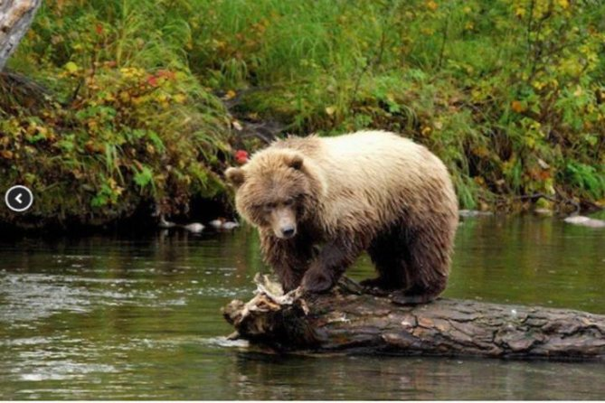 Icy Strait Shore Excursion: We're going on a bear hunt!