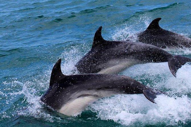 Gibraltar Shore Excursion: Safari en petit groupe de dauphins