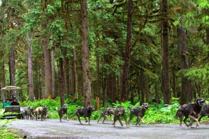 Juneau Shore Excursion:Sled Dog Discovery & The Famous Musher's Camp