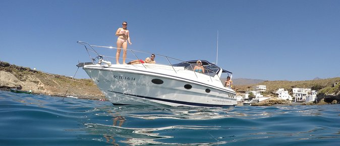 Whale and Dolphin Watching Private Motor Boat Half Day Charter