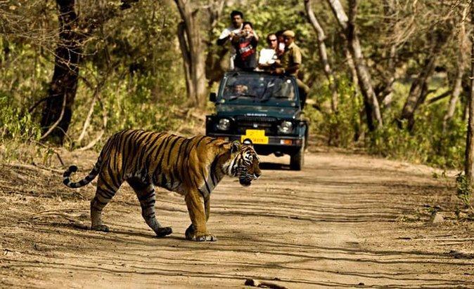 Jungle Safari i Rajaji National Park med privata överföringar