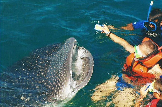 Whale Shark Swim Adventure SMALL GROUP from Cancun