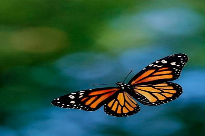 2b26dea846682 Monarch Butterfly Sanctuary Private Tour from Mexico City 2019