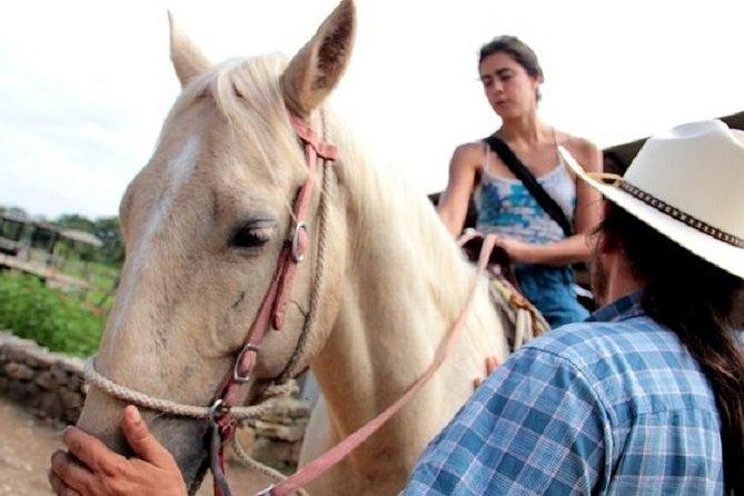 Horseback Riding and Tour in San Lorenzo Organic Farm