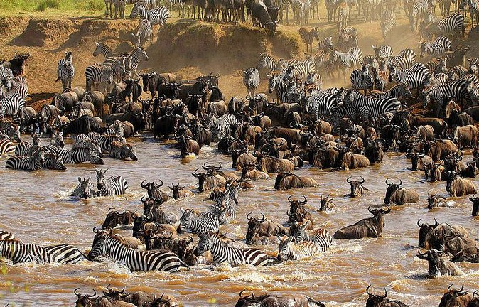 12 Days Kenya and Tanzania Wildlife Safari