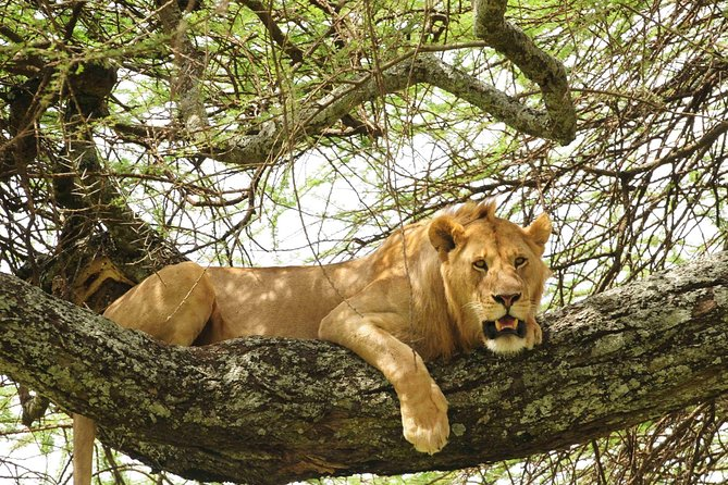 3-Day Safari Tour to Tarangire National Park, Lake Manyara National Park and Ngorongoro Crater from Arusha