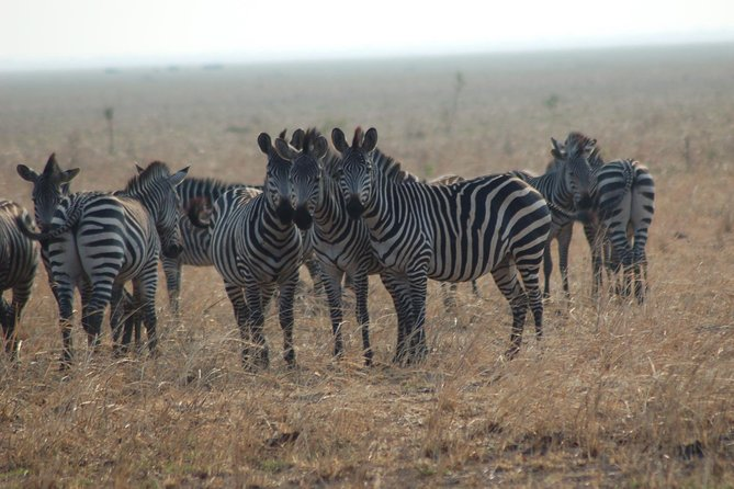 Mikumi National Park Guided Safari Day Trip from Dar es Salaam