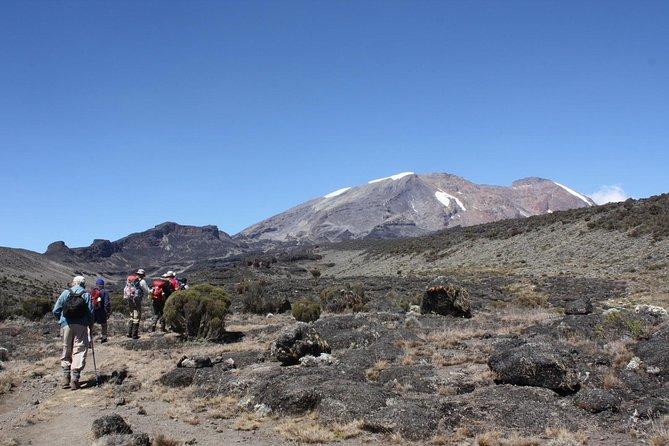 Mount Kilimanjaro Short Trek from Arusha