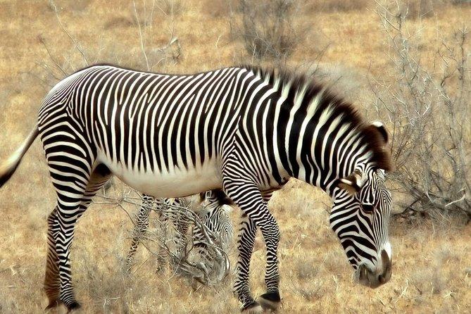 3 Days safari in Selous game reserve