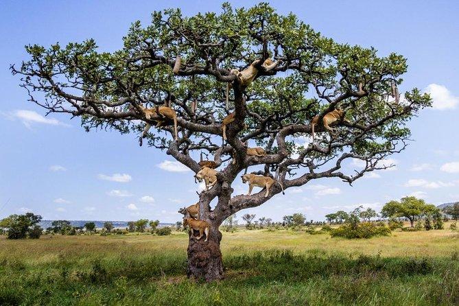 2-Day Lake Manyara and Ngorongoro Crater Private Safari from Arusha