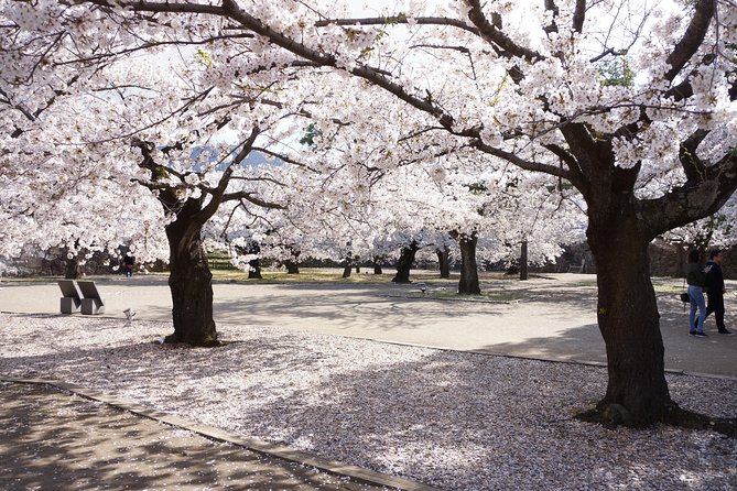 (Spring only) 1-Day Tour: Snow Monkeys & Cherry Blossoms in Nagano
