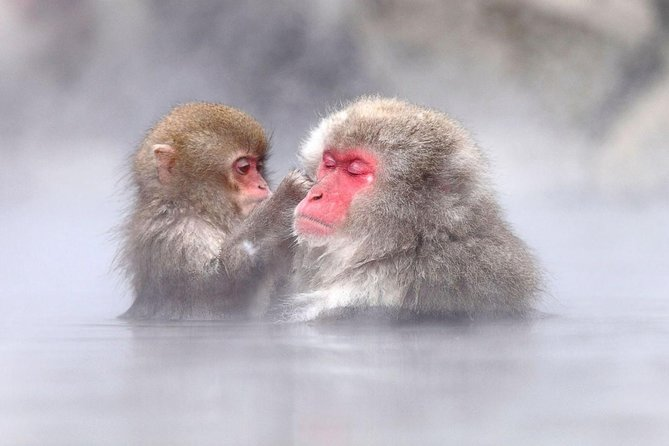 Full-Day Tour of Snow Monkeys, Zenko-ji Temple and Sake in Nagano
