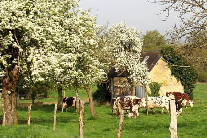 Typical Normandy food: cheeses and cider