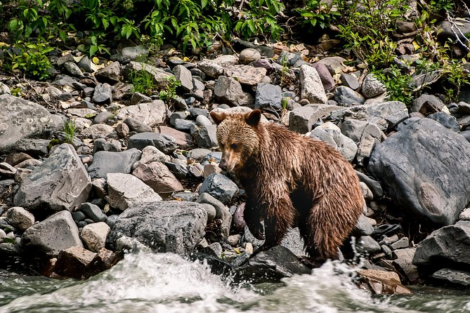 6-Day Babine River of Grizzlies Expedition