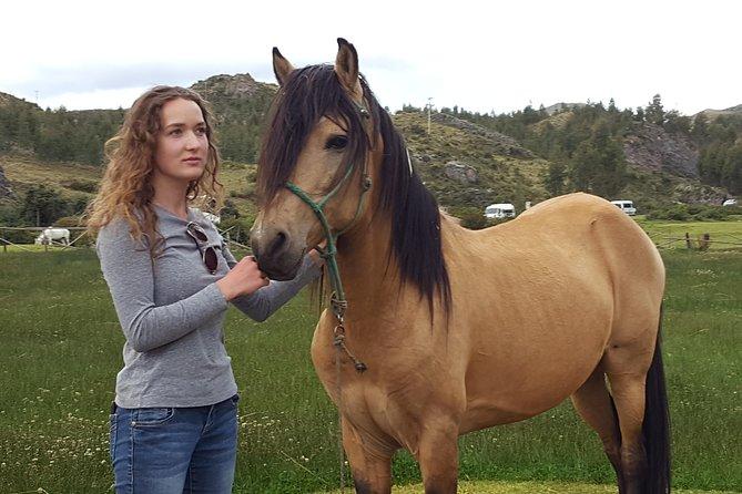 Equestrian experience - Peruvian paso Horse