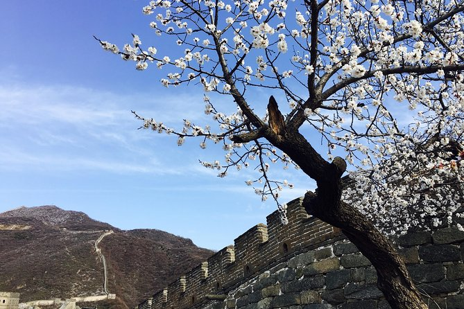 Great Wall Half Day Tour and VIP Beijing Acrobatic Show