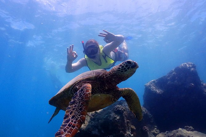 North Shore Turtle Cove Guided Snorkeling Tour