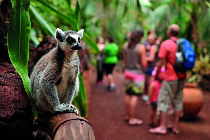 Oasis Wildlife Fuerteventura: Entrance Ticket & Lemur Experience, Fuerteventura, ESPAÑA