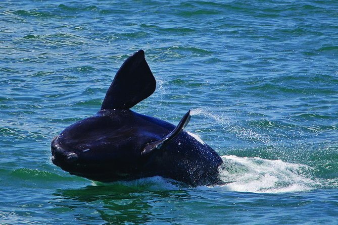 Wine-Tasting and Whale-Watching Tour from Cape Town