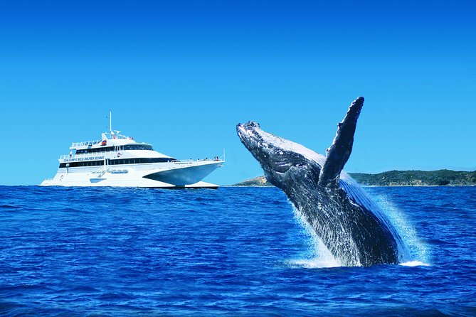 Tangalooma Island Resort Premium Dolphin Feeding Day Cruise with Whale Watching