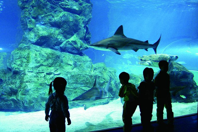 Afternoon Coex Aquarium, Han River Cruise Tour