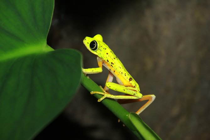 Night Walk Experience at Natura Eco Park, (frogs snakes mammals insects birds)