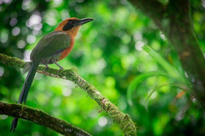 Birdwatching Tour at Natura Eco Park