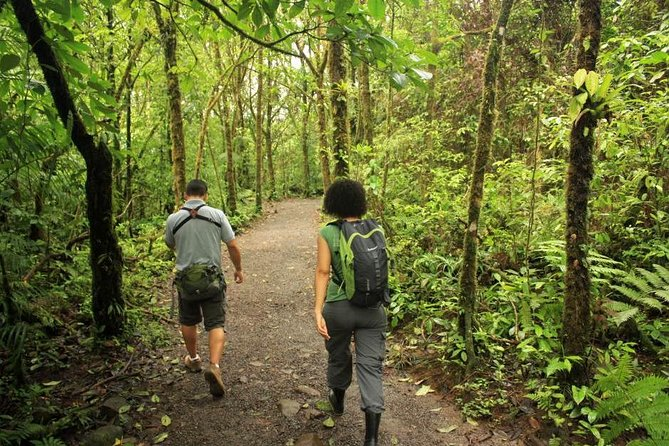 Combo Tour: Hanging Bridges, La Fortuna Waterfall, Arenal Volcano Hike