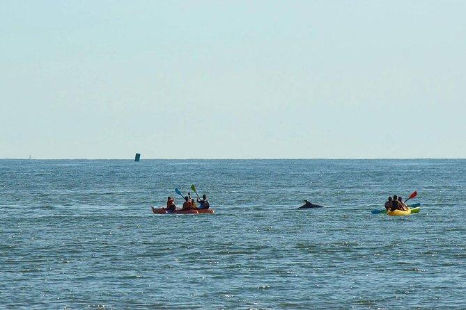 Excursions En Kayak Au Coucher Du Soleil Avec Les Dauphins