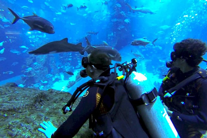 Diving with Sharks certified