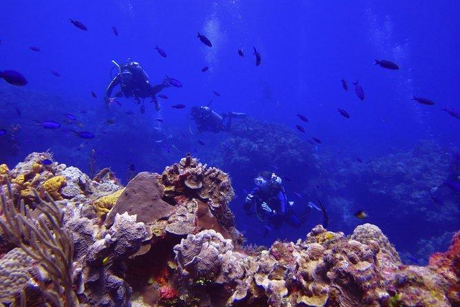 Cozumel Xpress 2-Tank Dive from Playa del Carmen
