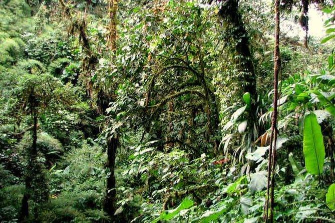 Santa Elena Cloud Forest Reserve Admission Ticket