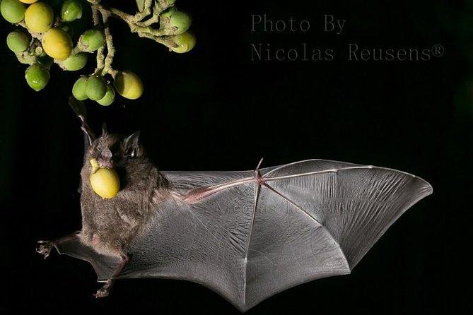 Monteverde Bat Jungle Admission Ticket