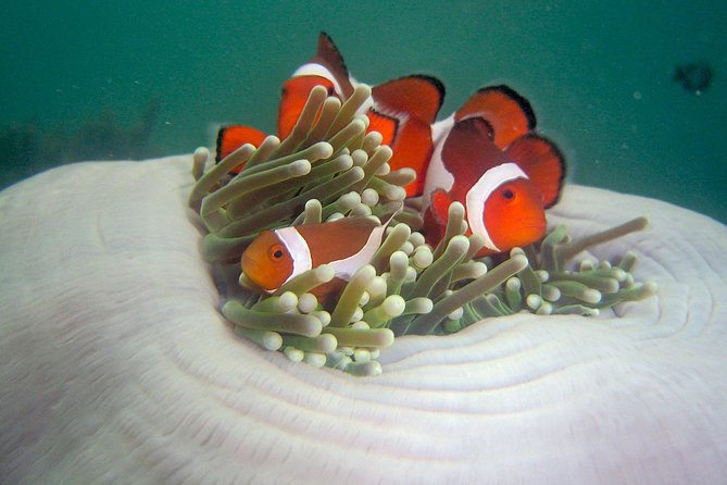 Tunku Abdul Rahman Marine Park – Schnorcheln mit Coral Flyer Zipline