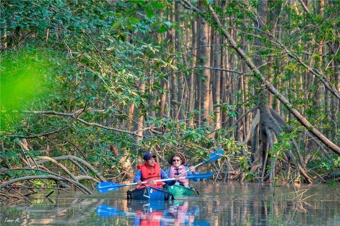 Excursion d'exploration Mangrove Kayak de Puerto Jimenez