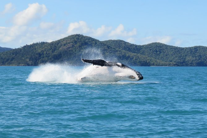 Whitsundays Whale Watching Cruise from Airlie Beach photo 1
