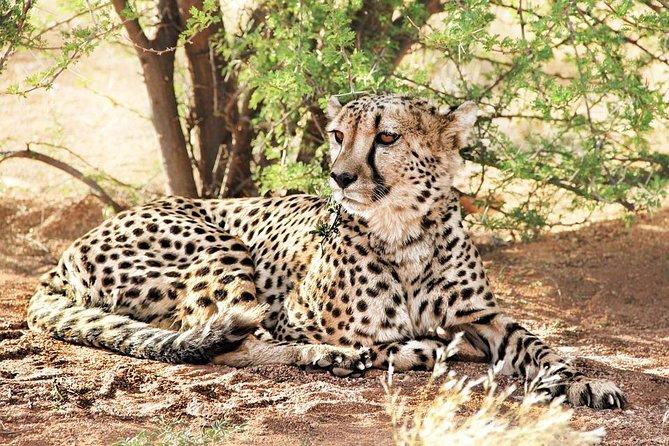 6 Days Camping Safari(Budget) : Lake Manyara to Serengeti to Ngorongoro Crater