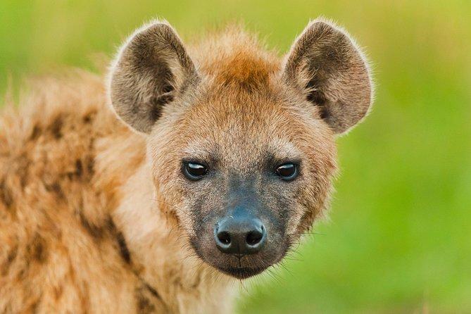 Day 3 Camping Safari : Lake Manyara to Ngorongoro Crater to Tarangire (Budget)