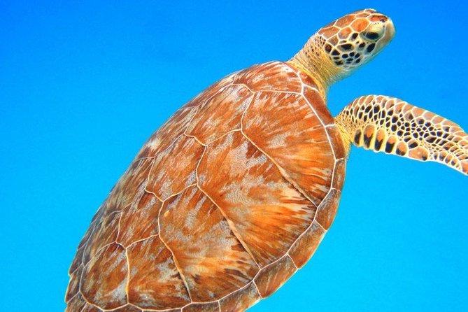 Afternoon Snorkeling with Sea Turtles