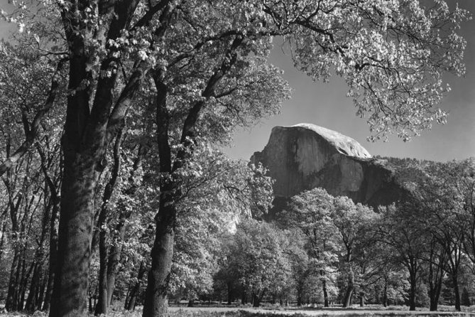 Half Dome, Autumn, Trees by Ansel Adams