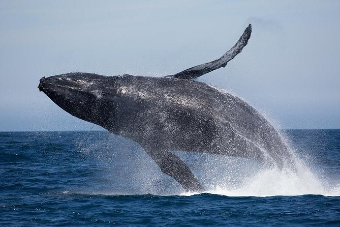 Costa Rica Whales and Dolphins 5 nights - 6 Days